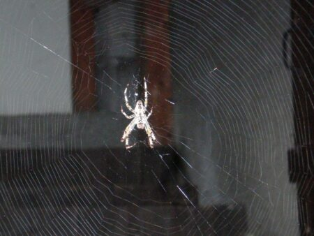 Araignée illuminée sur sa toile