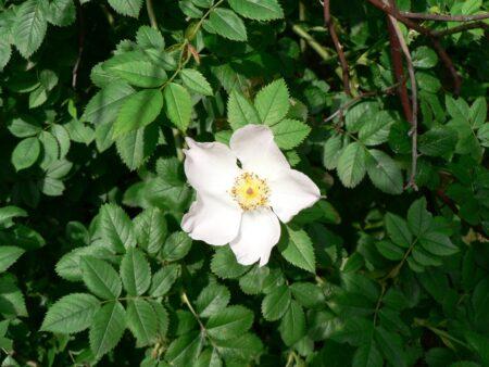 Fleur blanche sur fond de verdure