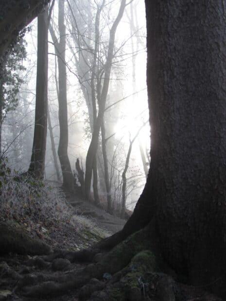 Brouillard dans la forêt en hiver