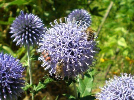 Insectes en groupe sur fleur